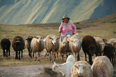 Shepherdess near Chinchero Peru