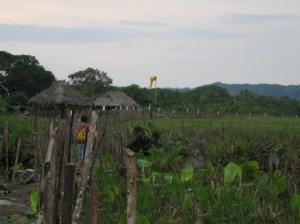 Grass airstrip at Mamitup0