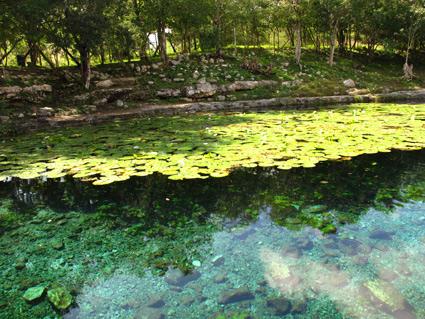 Yucatan cenote or sinkhole