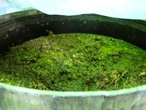 Abe Schoener wine process Red Hook Winery
