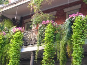 New Orleans lush balcony