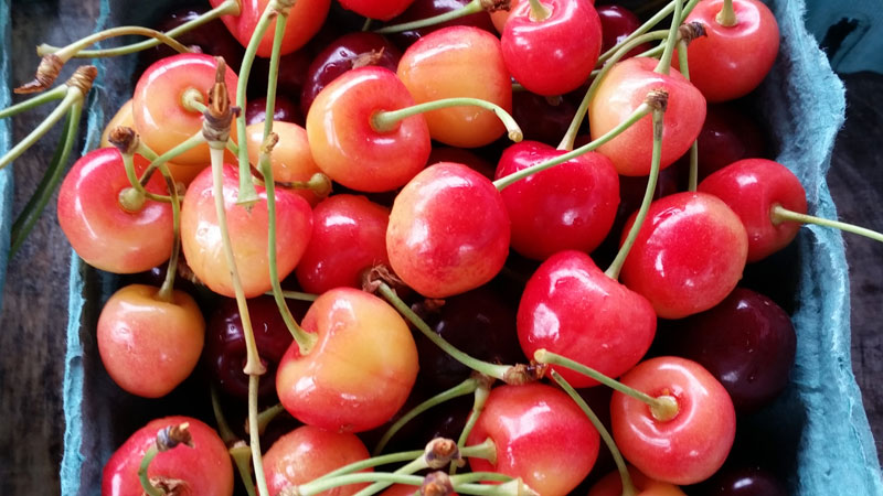 Rainer and sweet cherries from Fishkill Farms