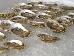 Blue Point Oyster farms tasting