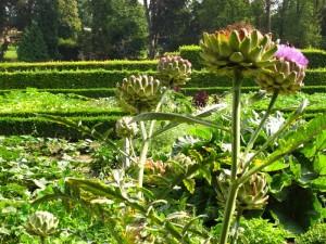 Annevoie's Kitchen Garden is bursting with produce