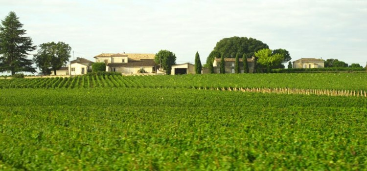 Vineyard and Chateau in Bordeaux region of France