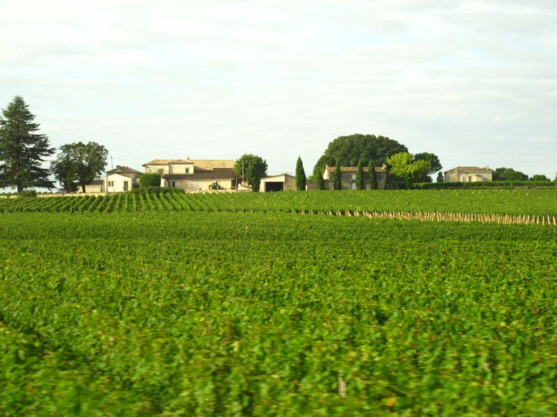 Vineyard and Chateau near St Emilion, France