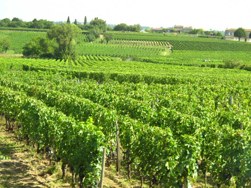 Vineyards of St Emilion, France