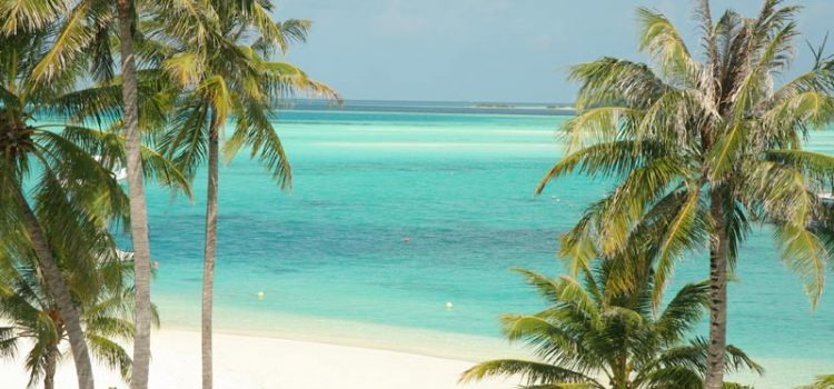Blue water, white sand and palm trees in the Maldives